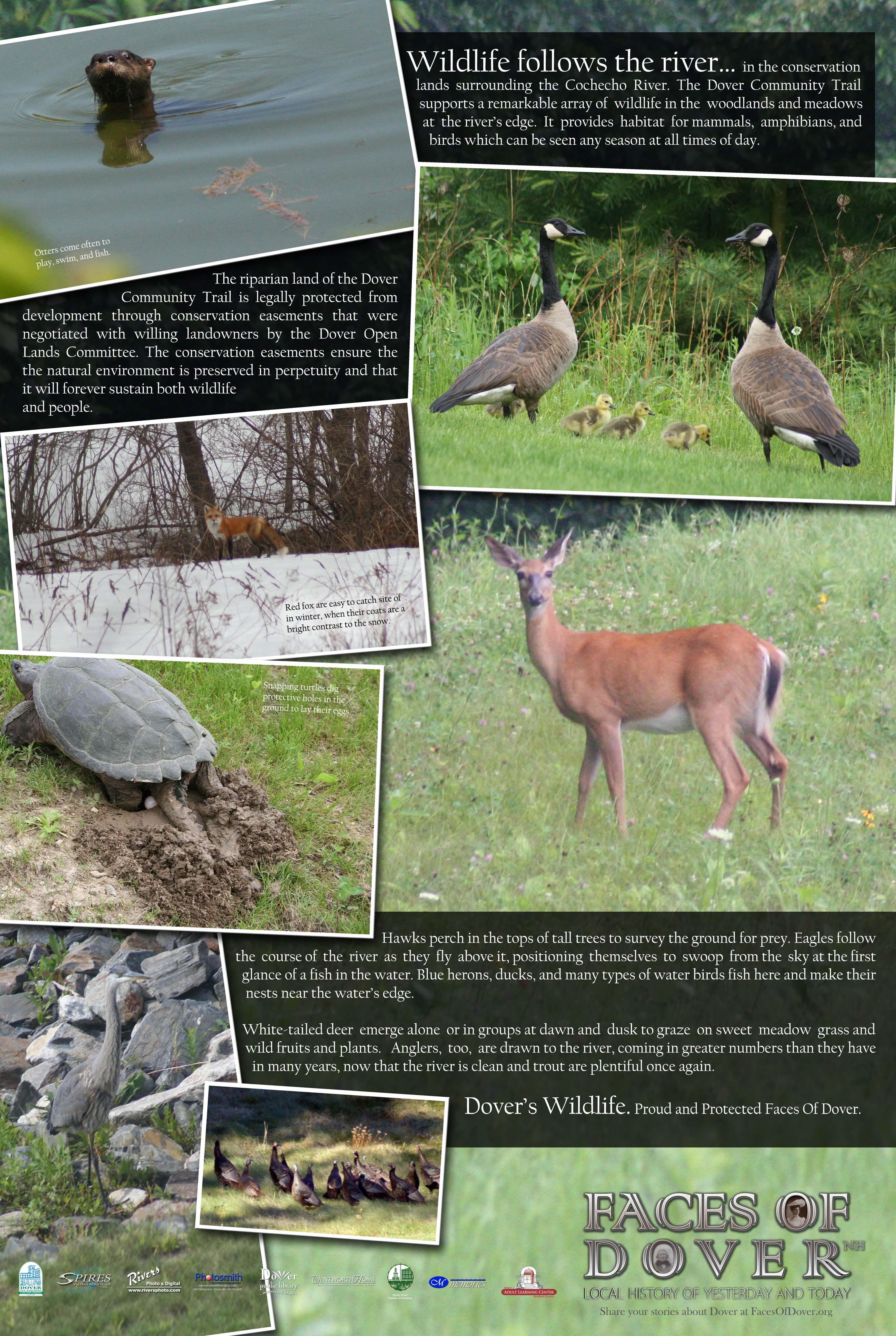 Dover's Wildlife